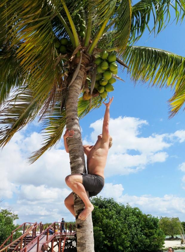 C coconut